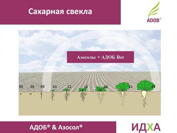 adob_rus_pr_17_1