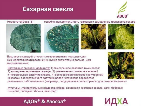 adob_rus_pr_18_1