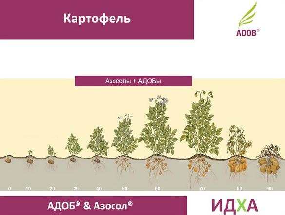 adob_rus_pr_23_1