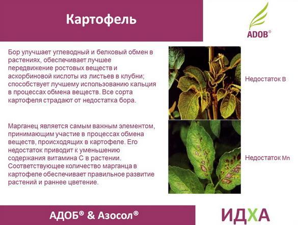 adob_rus_pr_24_1