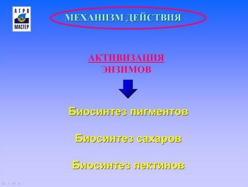 agromaster_pr_41_1.jpg