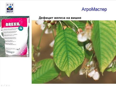 agromaster_pr2_16_1.jpg