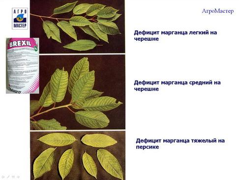 agromaster_pr2_19_1.jpg