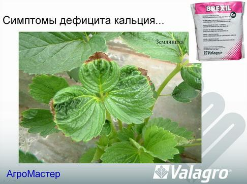 agromaster_pr2_21_1.jpg