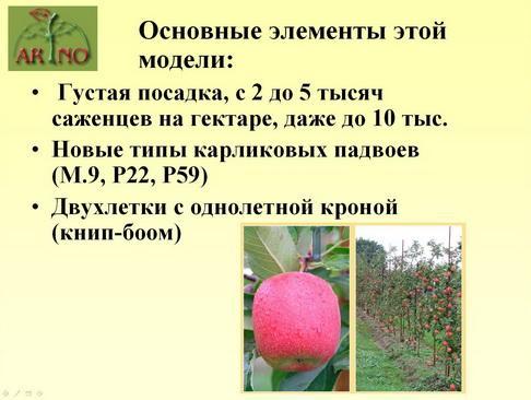 arno_plodpitomnik_pr_06_1.jpg