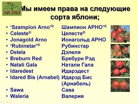 arno_plodpitomnik_pr_10_1.jpg