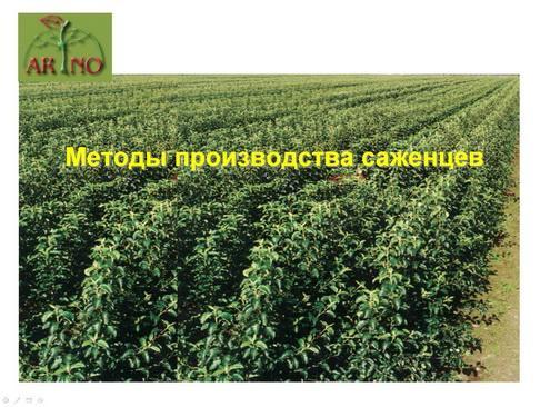 arno_plodpitomnik_pr_12_1.jpg