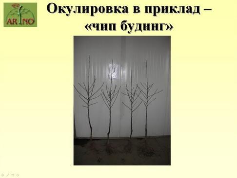 arno_plodpitomnik_pr_14_1.jpg