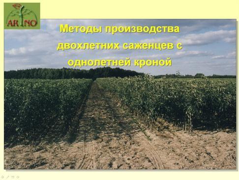 arno_plodpitomnik_pr_15_1.jpg