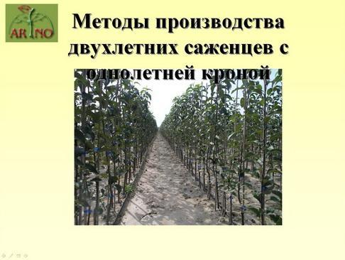 arno_plodpitomnik_pr_17_1.jpg