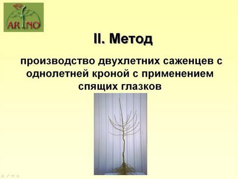 arno_plodpitomnik_pr_18_1.jpg