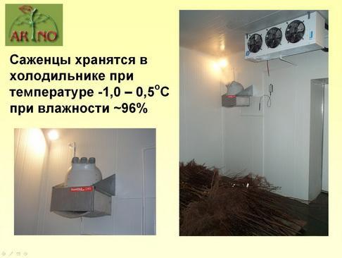arno_plodpitomnik_pr_19_1.jpg
