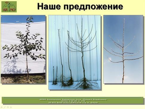 arno_plodpitomnik_pr_21_1.jpg