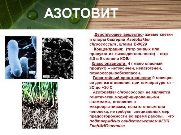 azotovit_i_fosfovit_pr_11