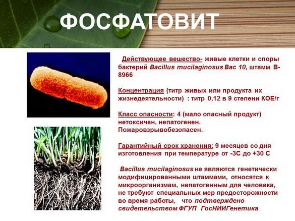 azotovit_i_fosfovit_pr_13