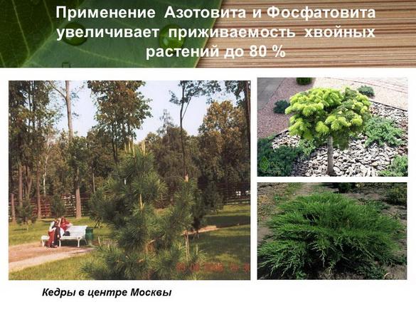 azotovit_i_fosfovit_pr_27