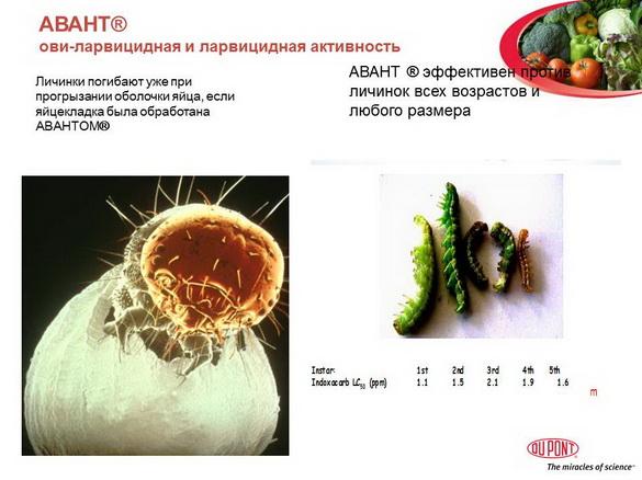avant_insekticid_pr_09