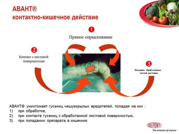 avant_insekticid_pr_10