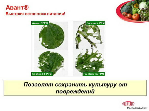 avant_insekticid_pr_11