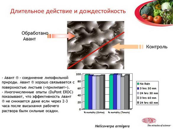 avant_insekticid_pr_12