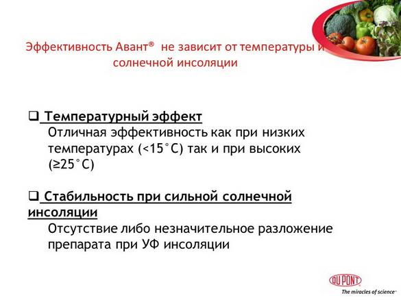 avant_insekticid_pr_15