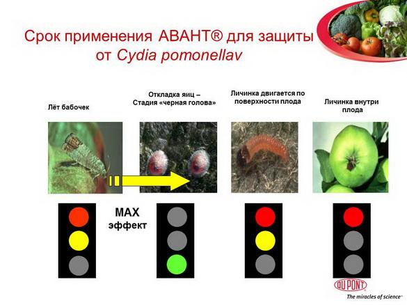 avant_insekticid_pr_19
