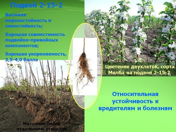 kvochkin_prezentaciya_09_1
