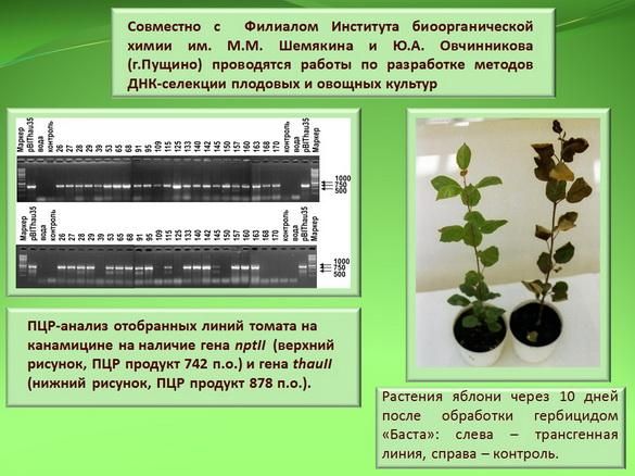 kvochkin_prezentaciya_11_1