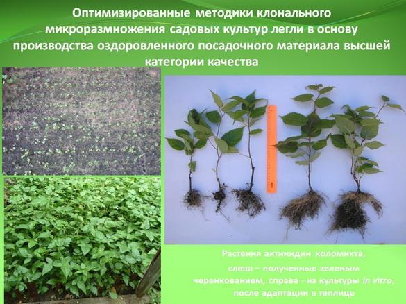 kvochkin_prezentaciya_12_1