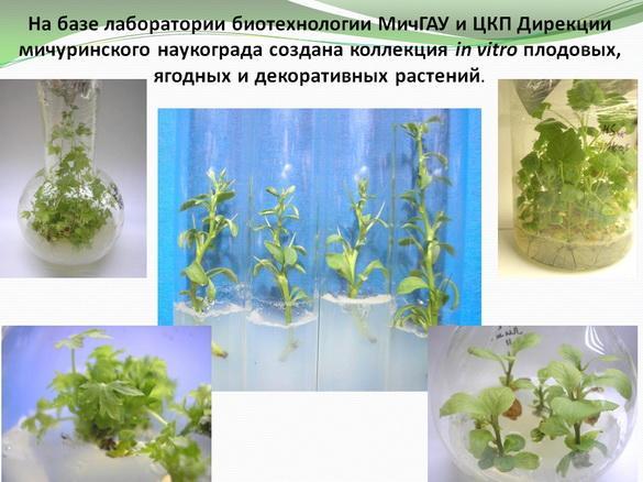 kvochkin_prezentaciya_13_1