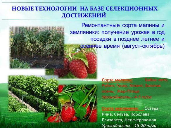 kvochkin_prezentaciya_14_1