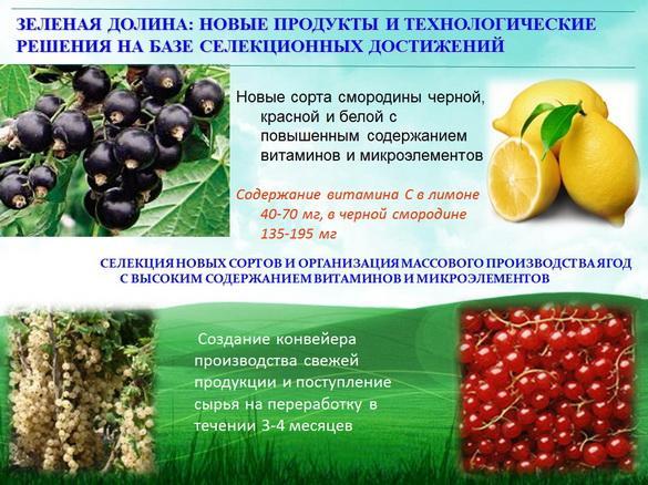 kvochkin_prezentaciya_15_1