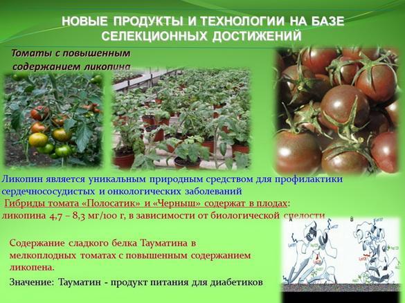 kvochkin_prezentaciya_17_1
