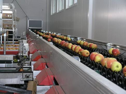 специальные машины для сортировки и упаковки плодов