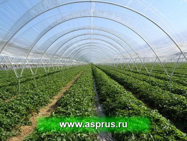 Выращивание овощей в закрытом грунте оквэд 19