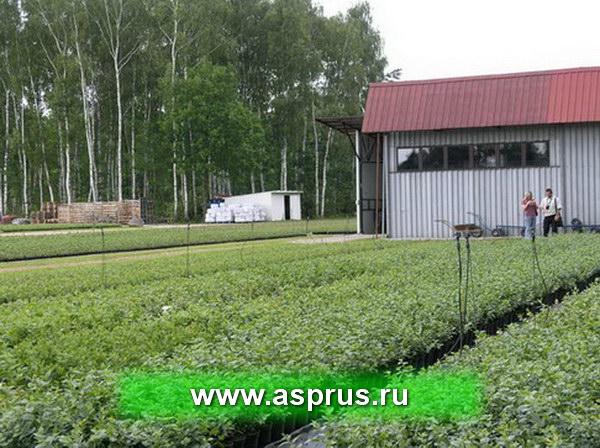 купить, куплю, земляника, технология, интенсивное производство, makosh_foto_pr_83.jpg