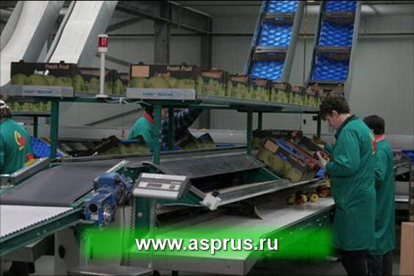 купить, куплю, земляника, технология, интенсивное производство, makosh_foto_pr_87.jpg