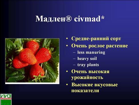 mazzoni_pr_21_1.jpg
