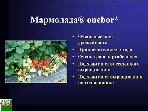 mazzoni_pr_28_1.jpg