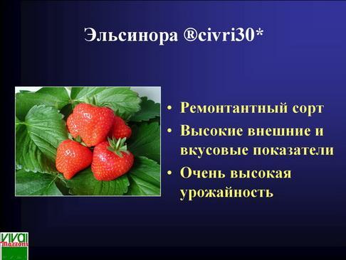 mazzoni_pr_34_1.jpg