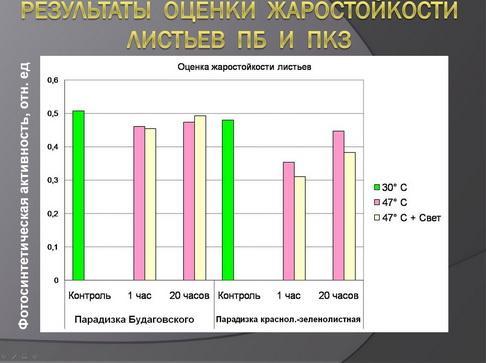 antocyani_milyaev_pr_06_1.jpg