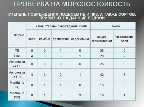 antocyani_milyaev_pr_08_1.jpg