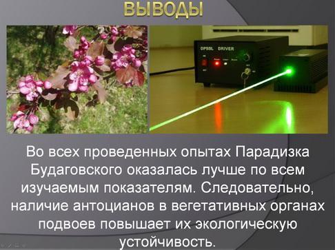 antocyani_milyaev_pr_10_1.jpg