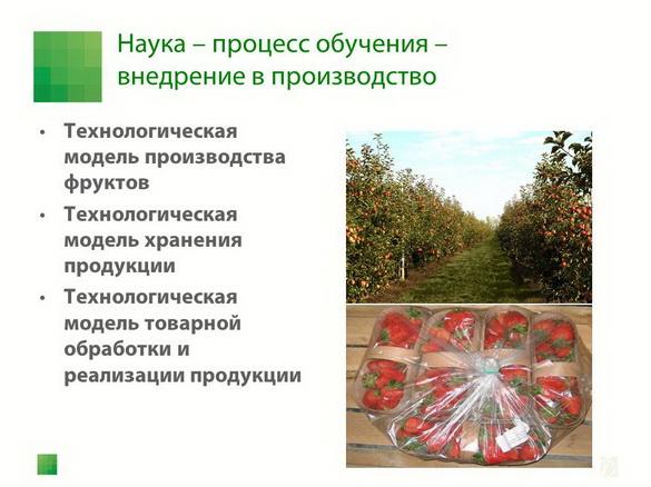 sad-gigant_klad_pr_2012_13