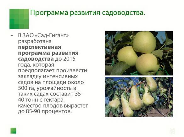 sad-gigant_klad_pr_2012_25