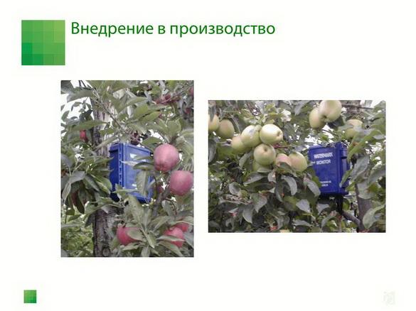 sad-gigant_klad_pr_2012_43