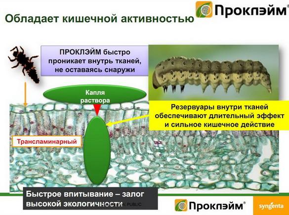 insekticidy_syngenta_13