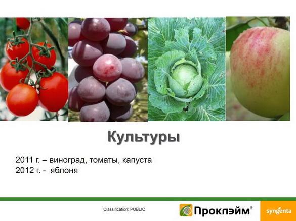 insekticidy_syngenta_23