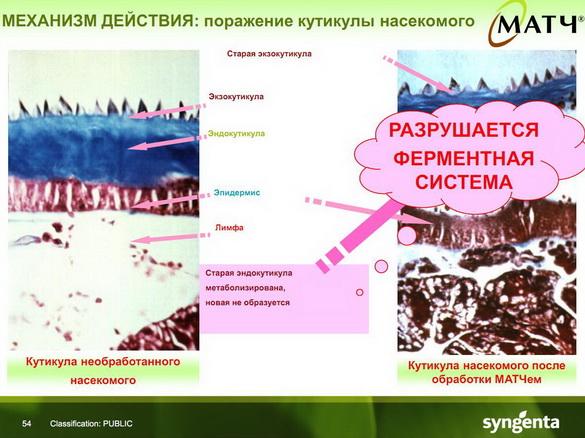 insekticidy_syngenta_52