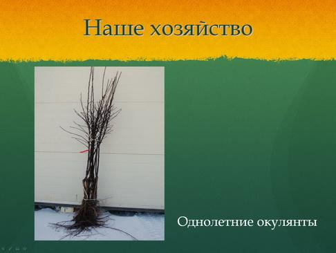 sulek_pitomnik_pr_10_1.jpg